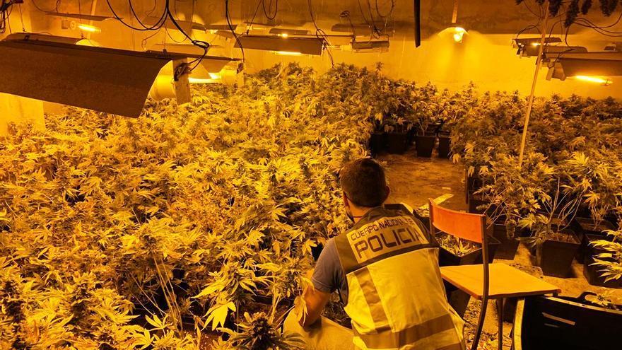 La Policía desmantela un laboratorio de marihuana en Gandia