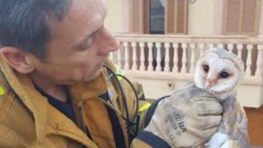 Feuerwehr von Palma rettet Eule in Son Ferriol
