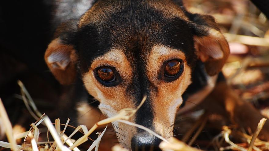 Desprotección animal por decreto