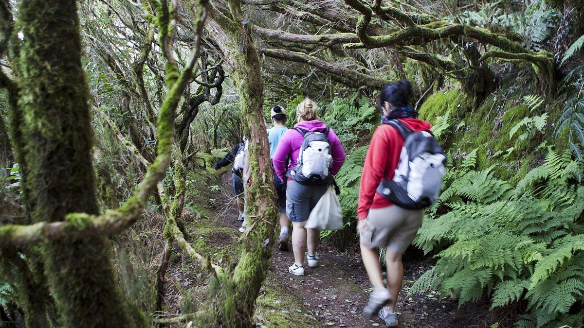 Un grupo de excursionistas recorre la laurisilva del sendero de El Pijaral, en los montes de Anaga.