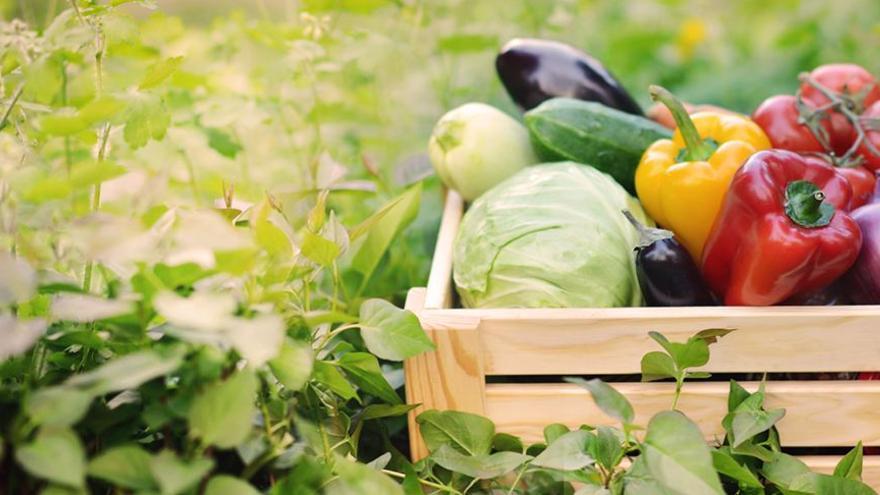 Alimentación sostenible: elige buenas prácticas, te enseñamos a reconocerlas