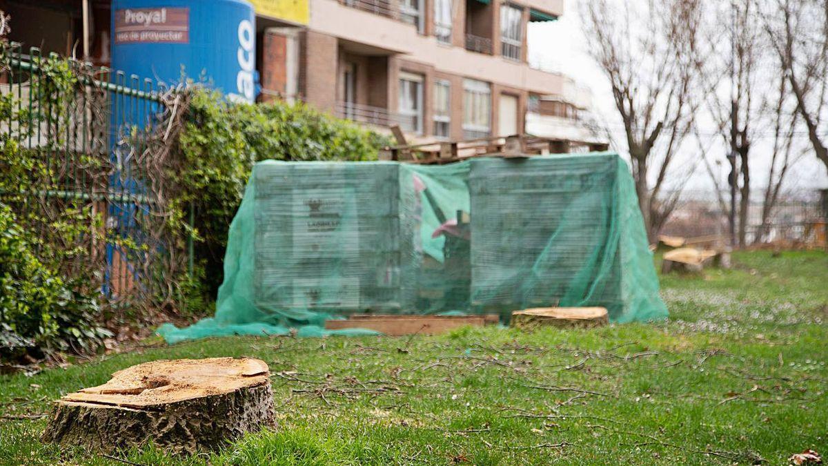 Árboles recientemente talados en Eduardo Barrón (Zamora)