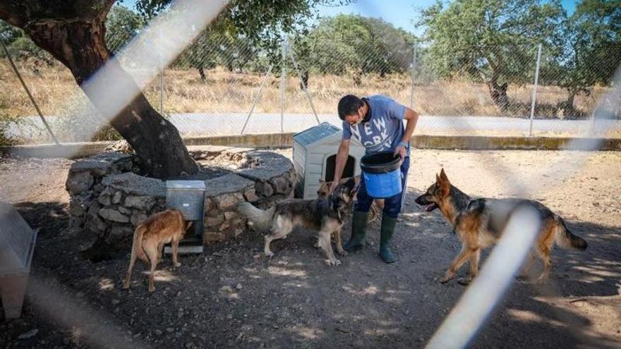 La perrera de Badajoz triplica el número de animales acogidos