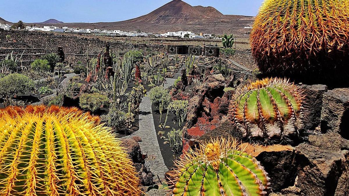 El Jardín de Cactus entra en el catálogo de una asociación experta en jardines