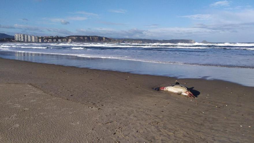 Aparece un delfín muerto en la playa de San Juan