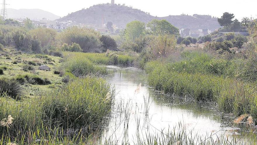 Tres humedales artificiales filtrarán aguas depuradas para mejorar la calidad del Magro