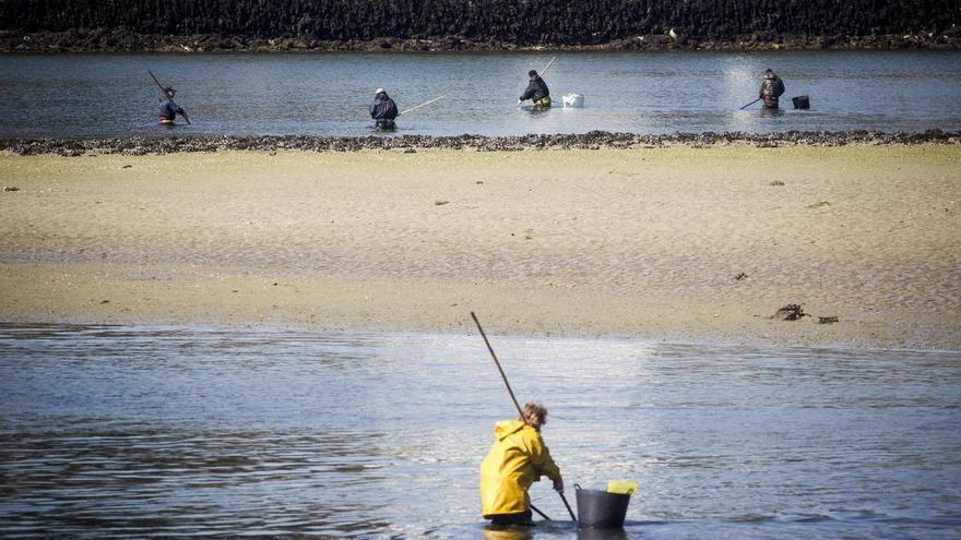 Mariscadores de O Burgo exigen a Gobierno y Xunta que concreten el pago de compensaciones por el dragado