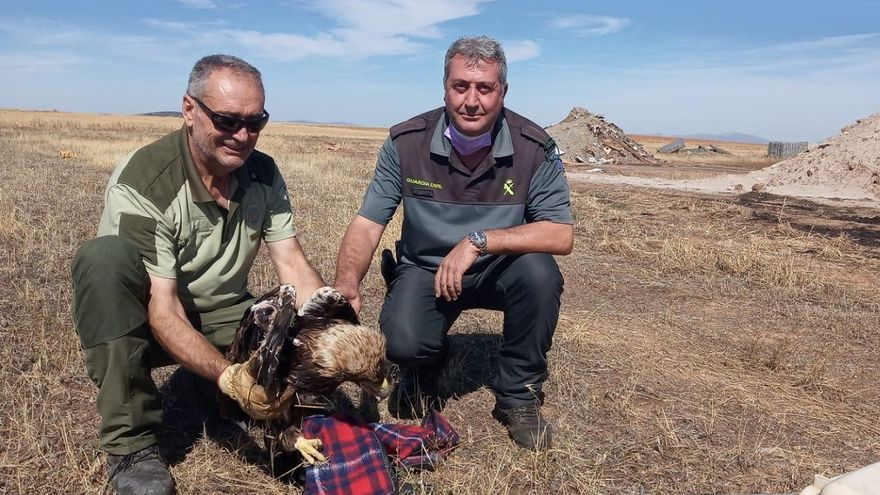 Agentes de Medio Ambiente rescatan un águila imperial en Hinojosa del Duque