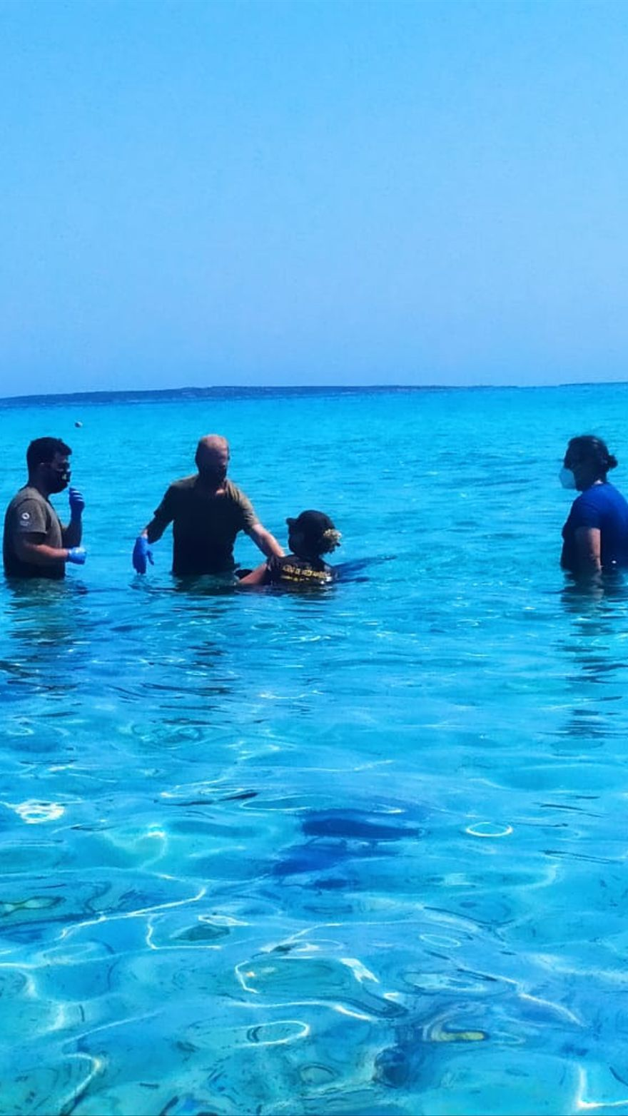 Intentan rescatar a un delfin despistado en la playa de Llevant en Formentera