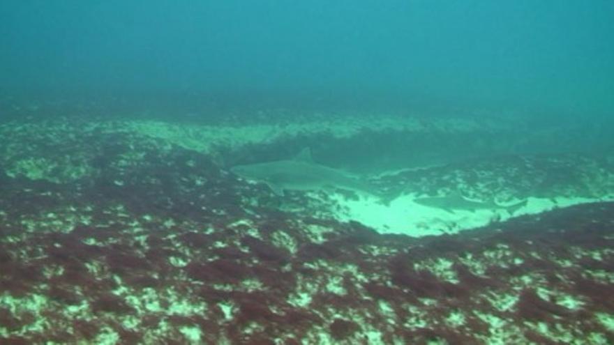 Tiburones en La Graciosa