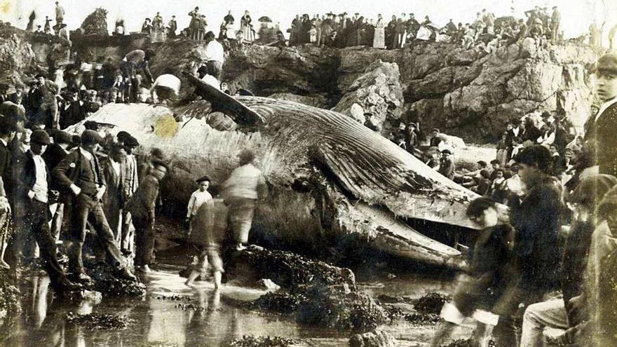 A ver la ballena 125 años después