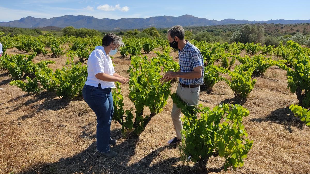 La vinya centenària La Vella, a Rabós d'Empordà, amb el seu propietari Àngel Poch, i l'enòloga Anna Espelt, del Celler Espelt, que explota la finca.