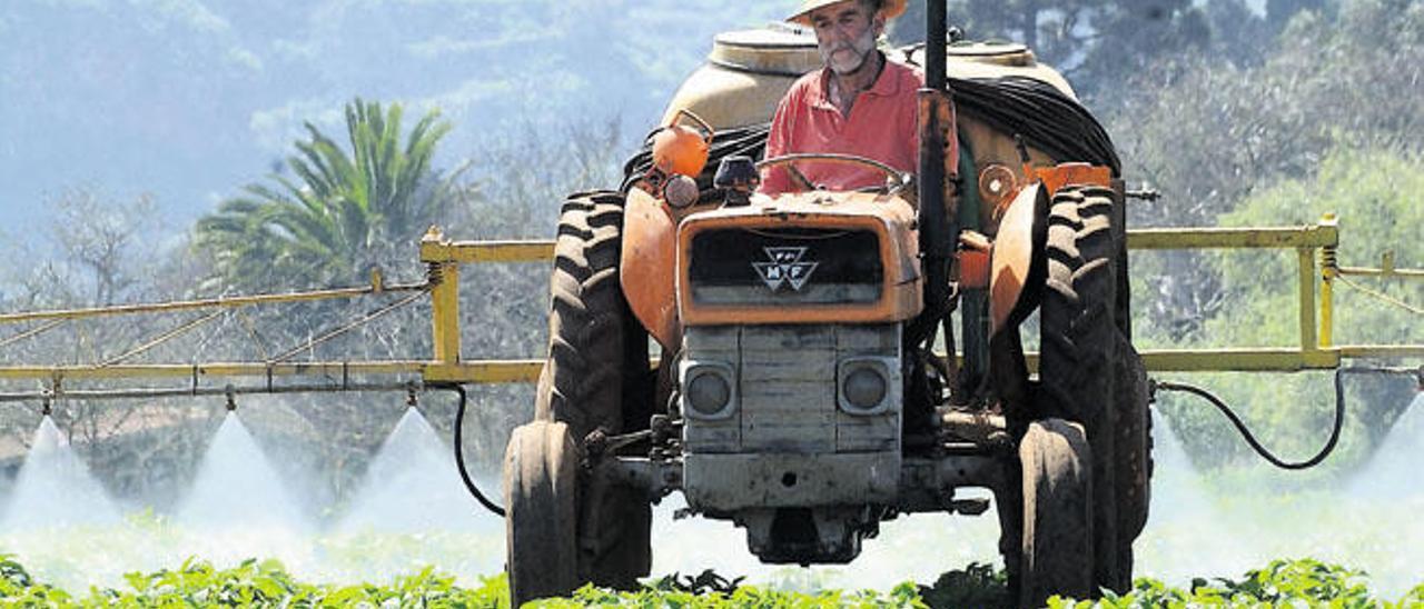 Chano Domínguez Quintana, ayer en Osorio, Teror, ofreciendo una demostración sobre el terreno en el arte de cultivar.