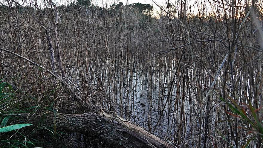 Una laguna como hábitat de la fauna acuática