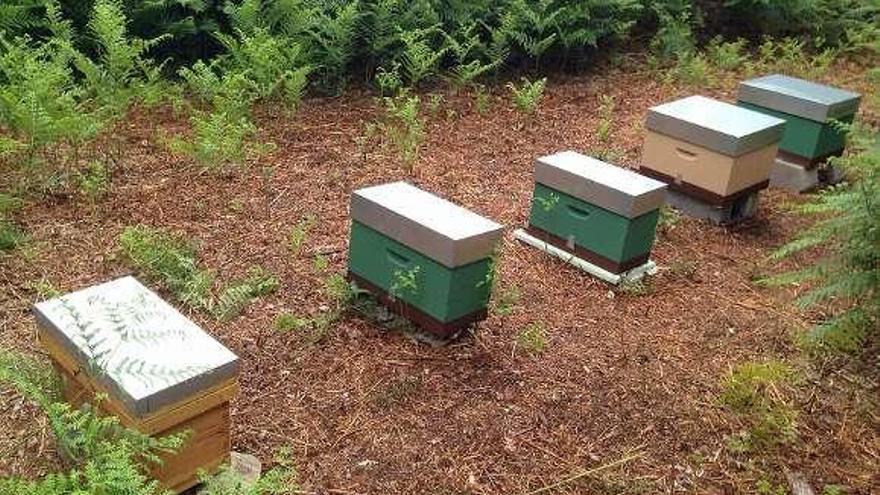 Concellos de la comarca de Ourense buscan poner en valor la miel