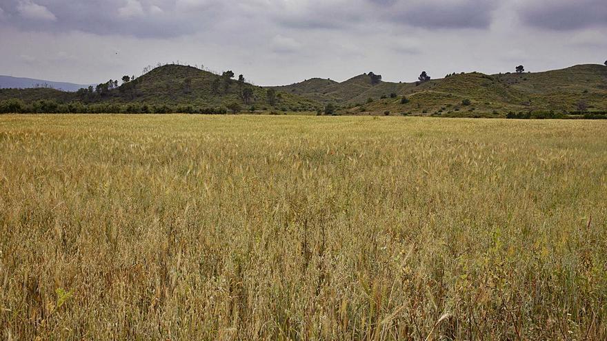 Proyectan otra gran planta solar entre Sumacàrcer, Navarrés y Chella