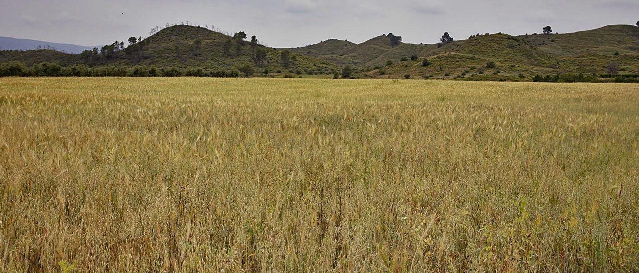 Terrenos de Chella donde se proyecta la instalación de placas solares. | PERALES IBORRA