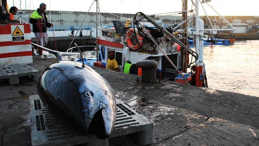 La comisión de protección del atún abre la mano y da esperanzas a la flota isleña