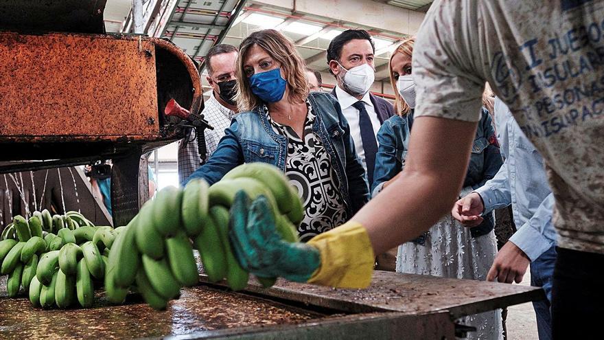 El PP denuncia la «sumisión» de Torres ante el ataque del PSOE al plátano