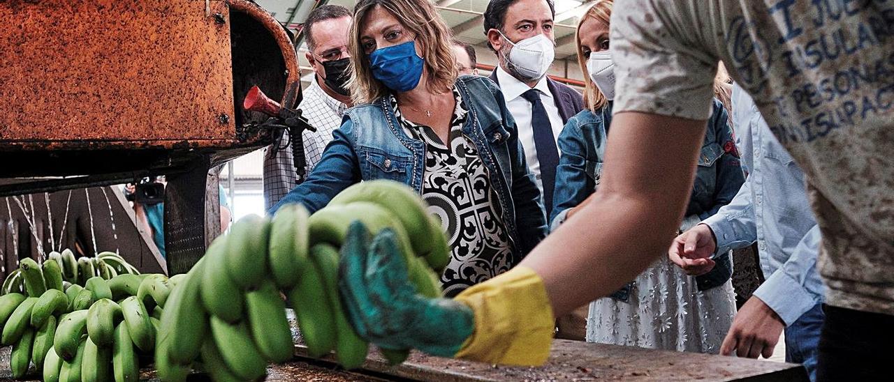 Milagros Marcos y Australia Navarro visitan la cooperativa agrícola Llanos de Sardina, en Gran Canaria. | | EFE /ÁNGEL MEDINA