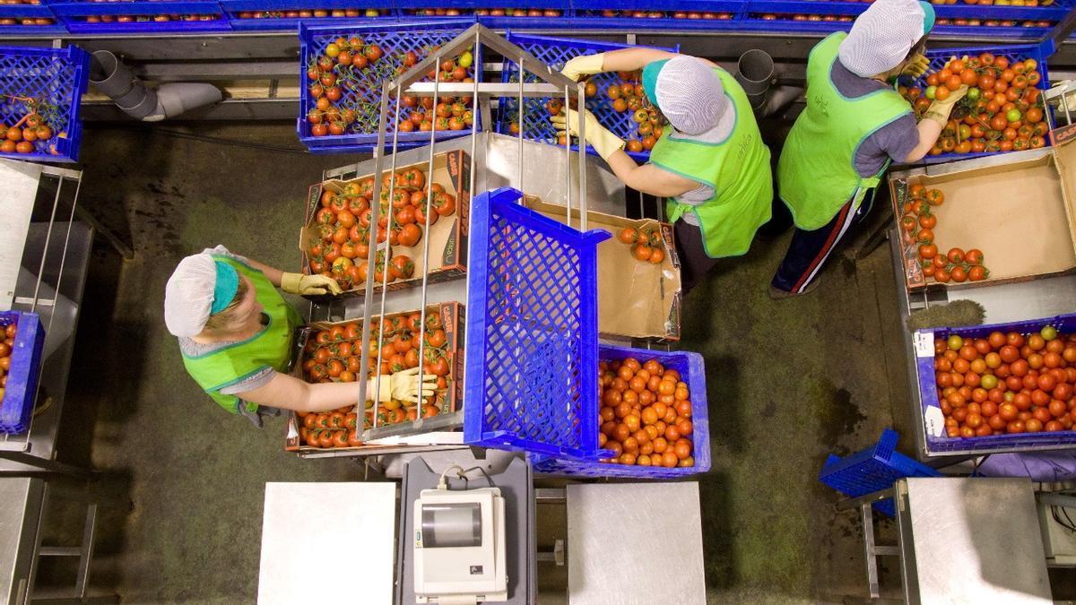 Trabajadoras de una central hortofrutícola, en una imagen de archivo.