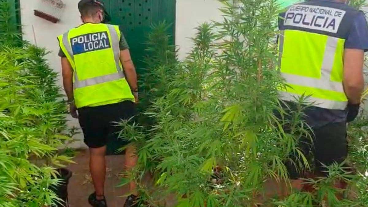 Dos policías, en la plantación de marihuana.