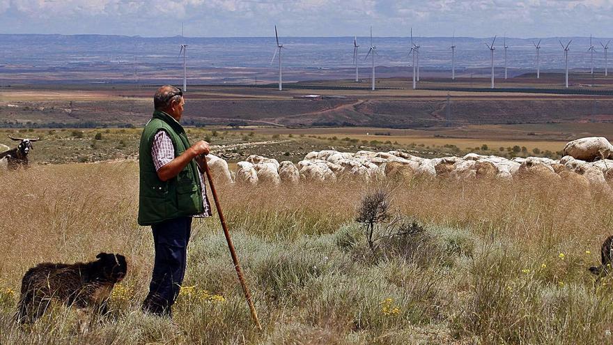El futuro del ovino aragonés, en jaque por el encaje de la nueva PAC