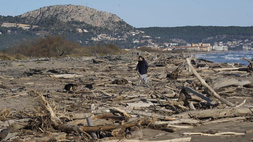 Retiren les restes vegetals que quedaven del Gloria a les platges de l'Estartit