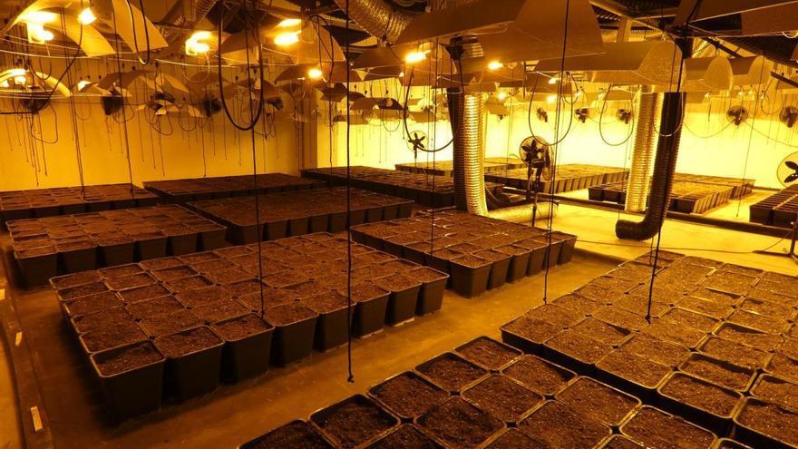 Desmantellen una plantació de marihuana amb tres detinguts en una nau de Santa Llogaia