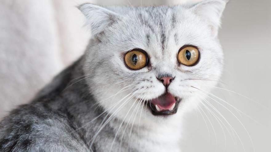 Un estudi demostra que els gats contreuen la inestabilitat emocional dels seus amos