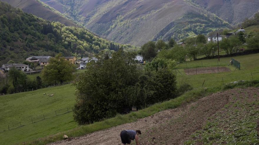 Así es la vida en la Asturias de los osos (salvajes, que no amorosos)