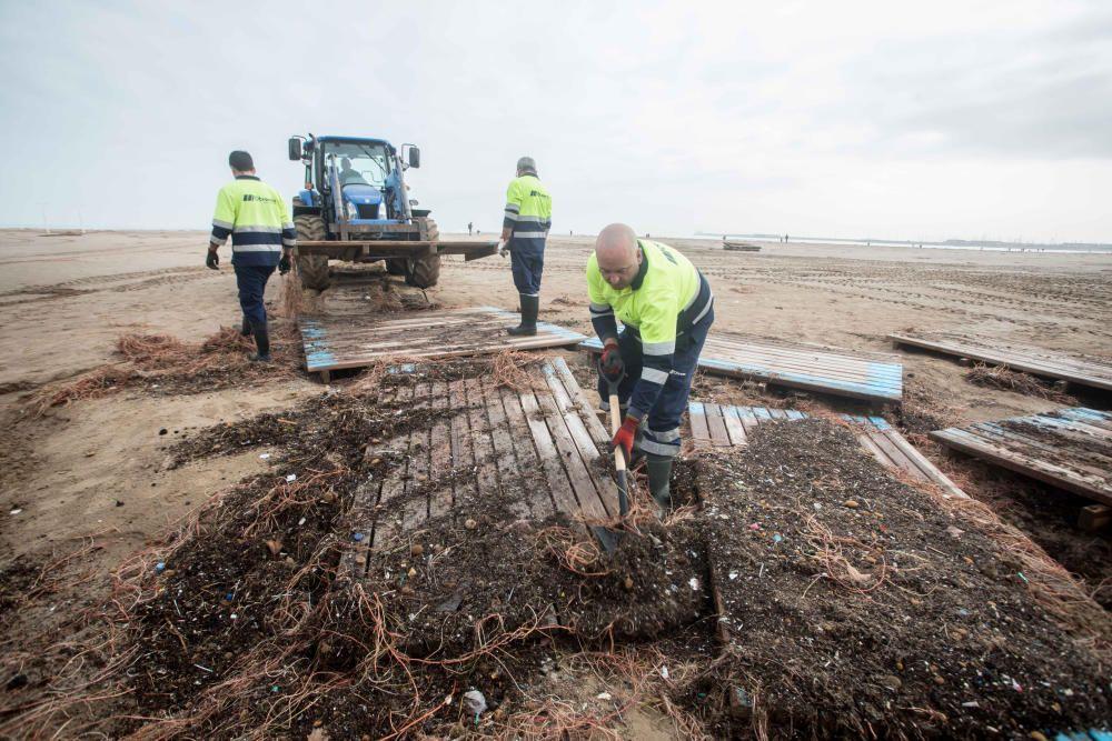 Tareas de limpieza de la playa de la Malva-rosa.