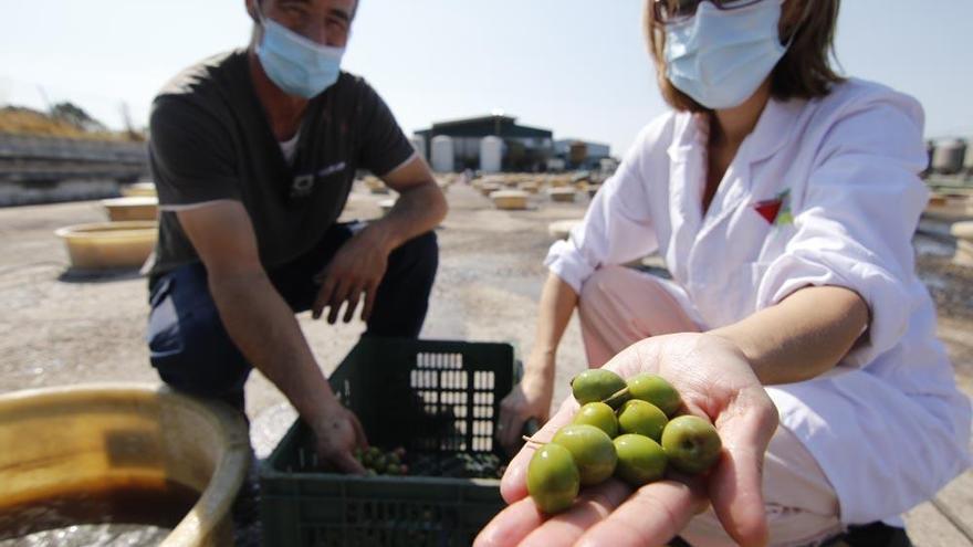EEUU suspende los aranceles al aceite de oliva y la aceituna de mesa