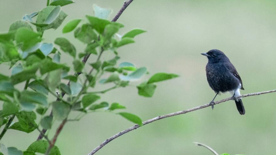 Las aves urbanitas se adaptan a todos los cambios