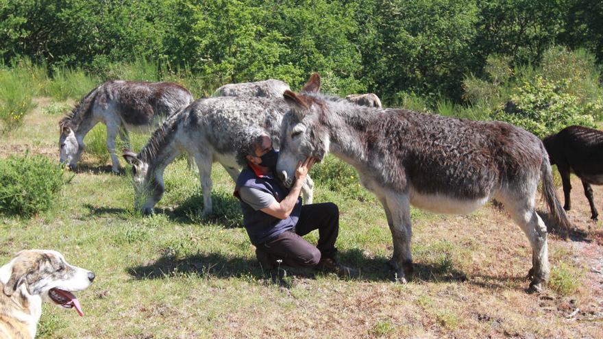 Los burros que previenen incendios en 1.000 hectáreas