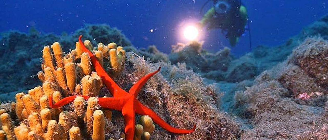Estrella de mar en la zona de inmersión Waikiki, en Puerto del Carmen. Al fondo, la operadora de cámara Laura Piñeiro.