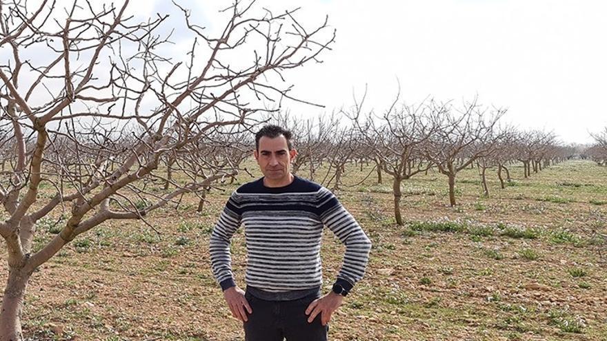 El pistacho emerge en la Comunitat Valenciana