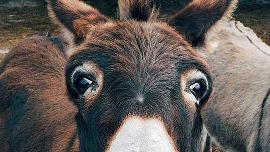 Mi candidato a alcalde es un burro