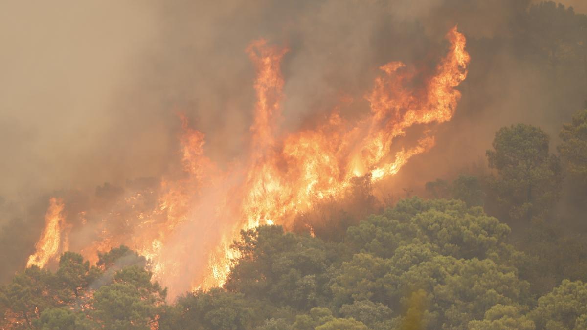 Incendio de Sierra Bermeja donde ha perdido la vida un bombero.