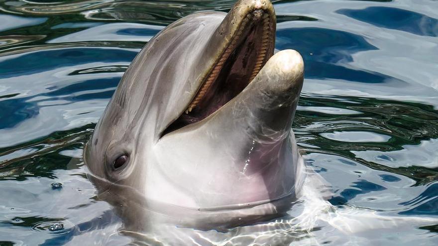 De ballenas con patas y pelo a delfines que se masturban