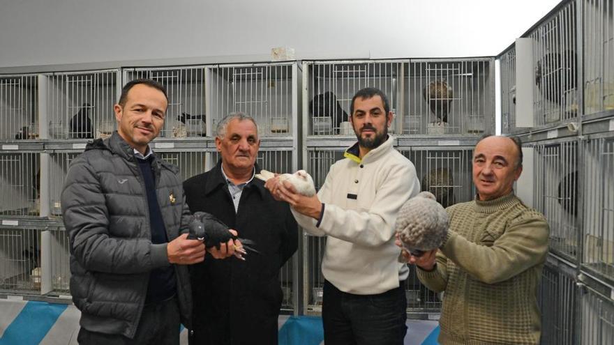 """Las mejores palomas de Galicia """"vuelan"""" a Cangas"""