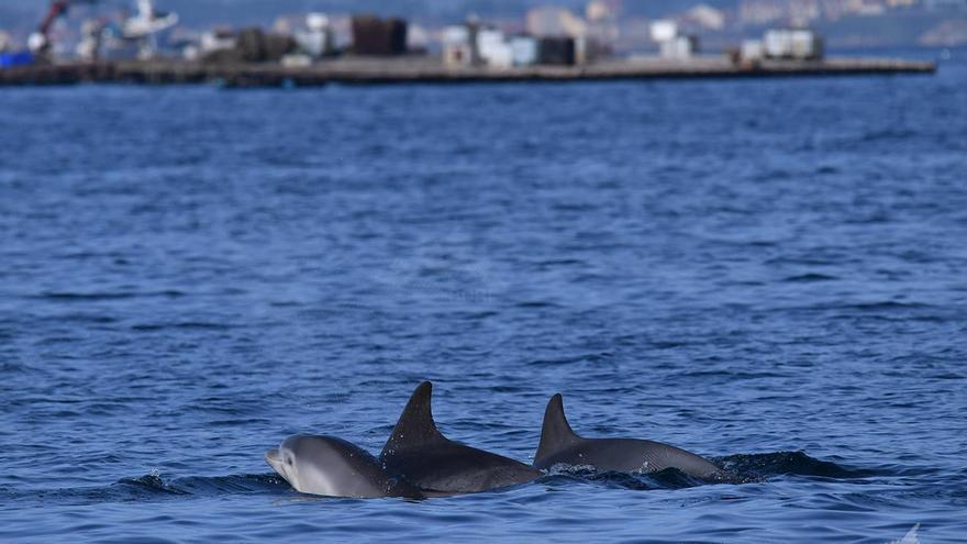 La hembra, en el centro, nada junto a sus dos crías, una de 30 meses de vida –a la derecha– y la otra de solo cinco.