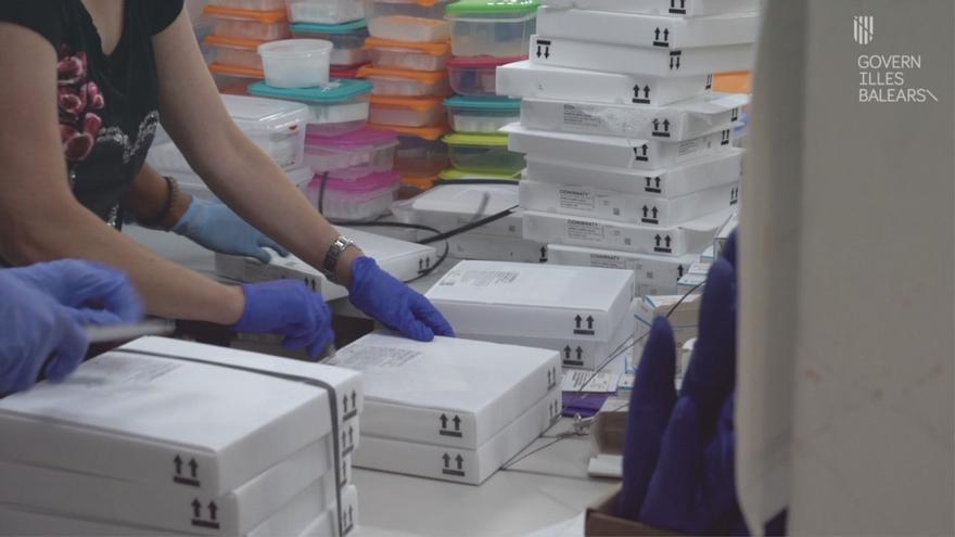 Europa permitirá almacenar la vacuna de Pfizer en neveras hasta un mes