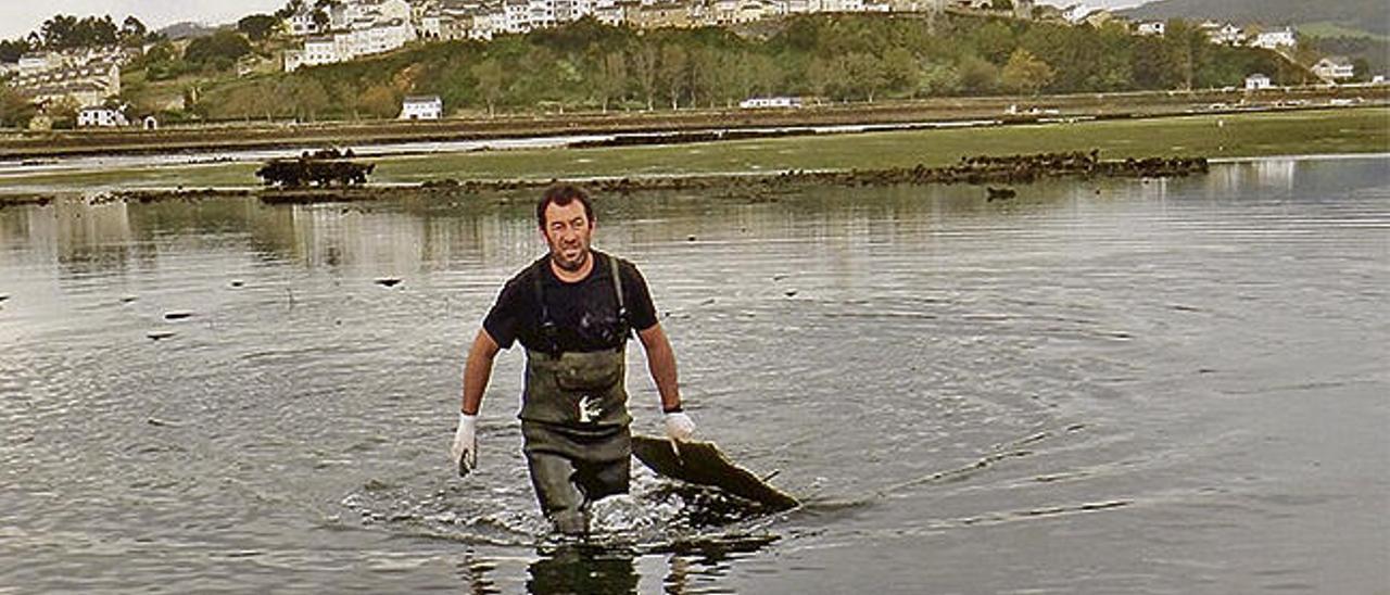 Castropol suma una segunda empresa dedicada a cultivar ostra en la ría del Eo