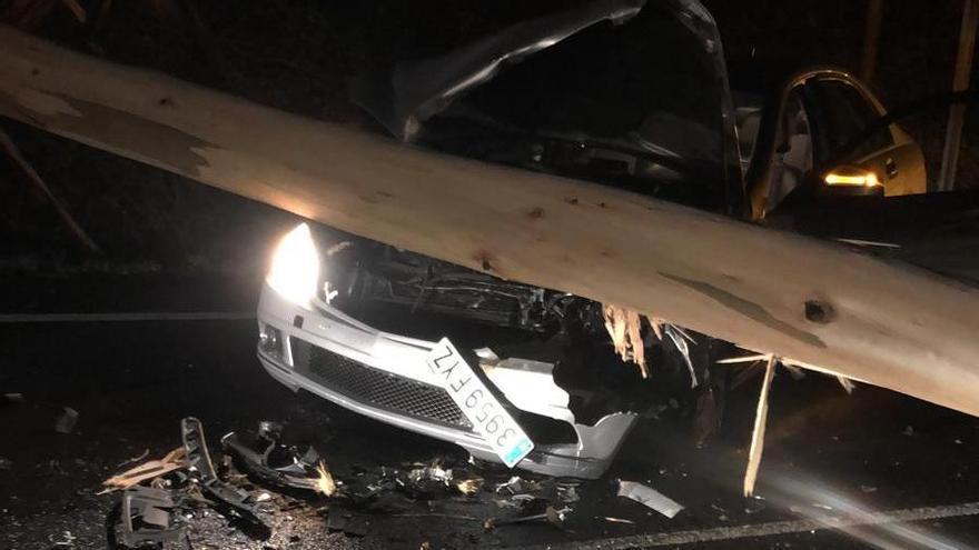 Herido al caer un eucalipto sobre su coche en Gondomar