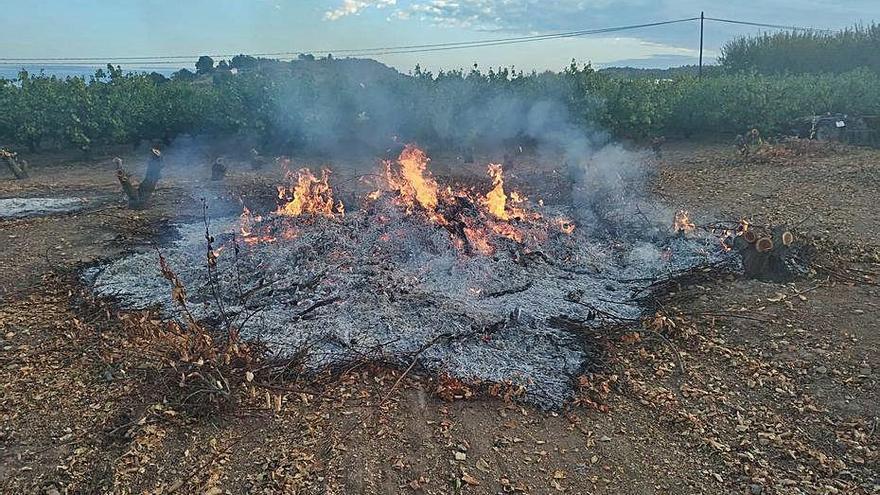 Un compost de podas y lodos como alternativa a las quemas agrícolas