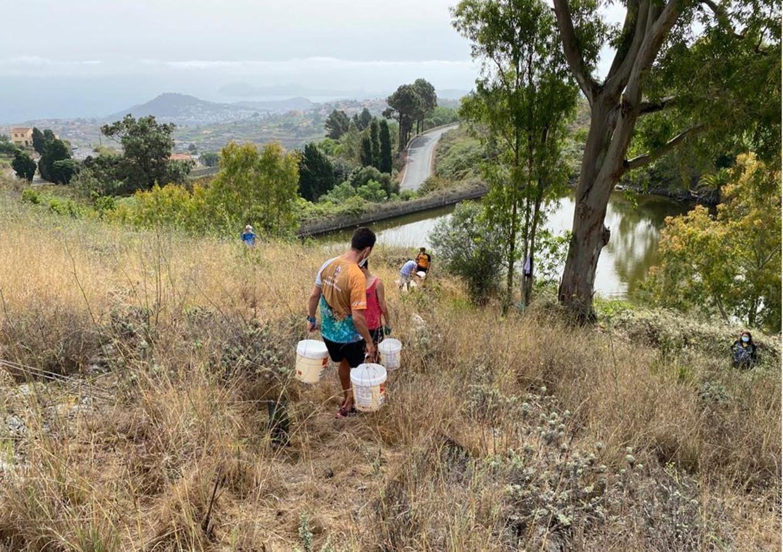 Riego de árboles en la Montaña de Firgas