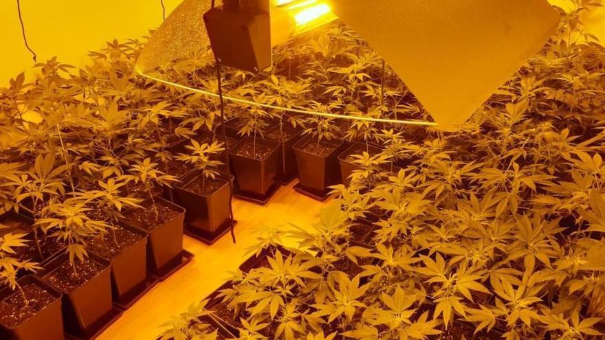 Un foc elèctric posa al descobert una plantació de marihuana a Manresa