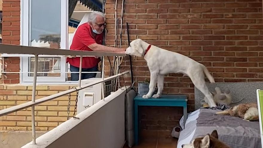 El bonito ritual diario de un anciano con los perros de su vecina en Alicante