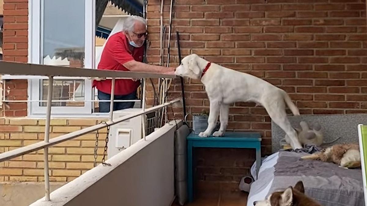 Max da de comer al perro Ron, de su vecina.